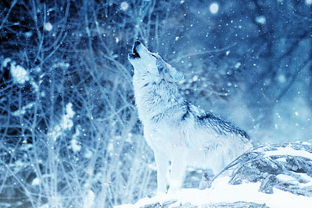 wolf, howl, animal, snow, art, vintage, winter