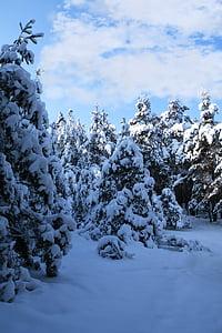 winter impressions, wintry, snow, cold, winter, winter magic, snowy