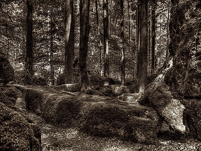 druid grove, forest, root, tree root, national park, overgrown, nature