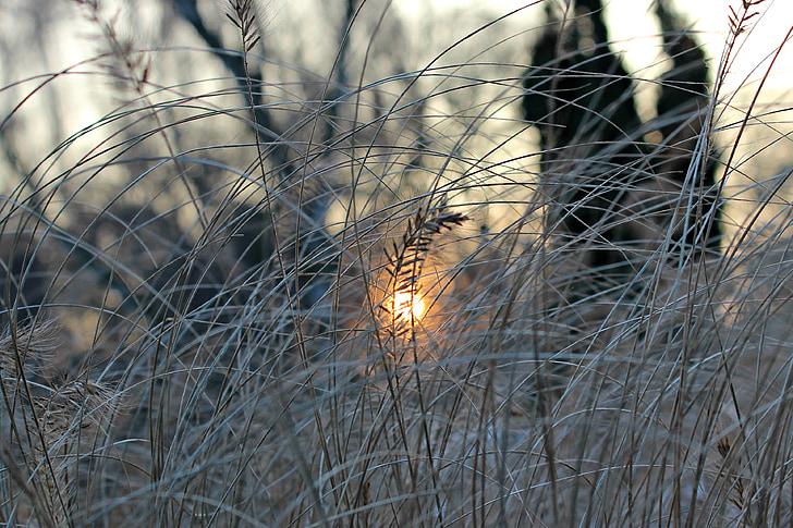 evening sun, winter, frost, nature, sun