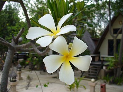 花, 绽放, 开花, 花香, 自然, 植物区系, 花瓣