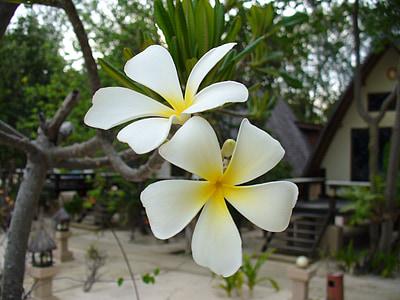 cvet, cvet, cvet, cvetlični, naravne, Flora, Latica