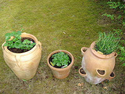 herbes, Sa, testos, Mediterrània, romaní, Melissa, maduixa