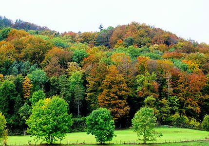 tardor, bosc, natura, bosc tardor, arbres, colors, color de la tardor