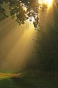 distància, boira, arbres, bosc, estat d'ànim, tardor, mística