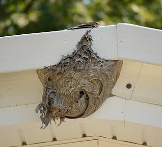 rusc, abella, niu, mel, insecte, natura, l'apicultura