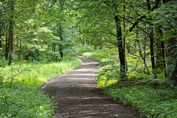 od, leśna ścieżka, Natura, drzewa, krzewy, lasu, piesze wycieczki