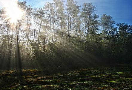 Forest, tráva, ráno, Príroda, lúč slnka, lúče, slnko