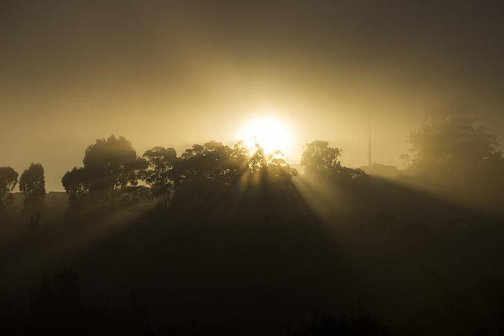 soluppgång, Sol, dimma, naturen, solnedgång, träd, solen
