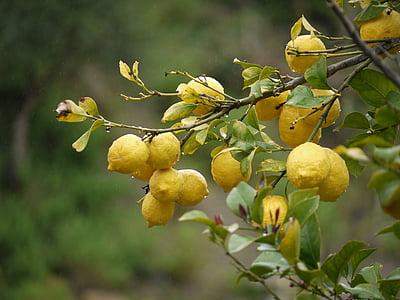 llimones, fruita, groc, fruites i verdures