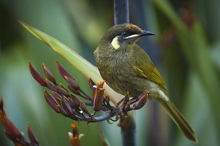 životinja, životinja fotografije, ptica, Krupni plan, priroda, biljni i životinjski svijet, životinje u divljini