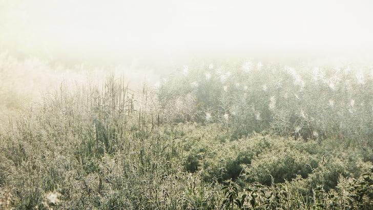 boira, boira de matí, natura, estat d'ànim, paisatge, morgenstimmung