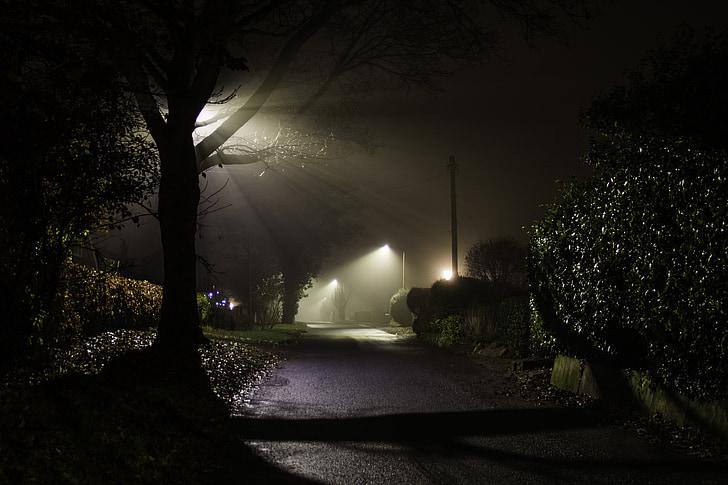 misty, lane, foggy, season, outdoor, scene, country