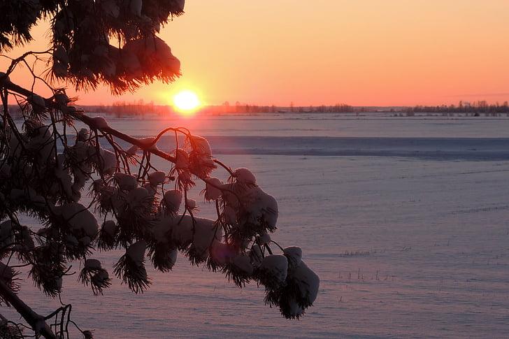 nature, sunset, winter, sun
