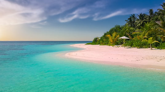 vaaleanpunainen beach, Beach, Paradise, Paradise beach, saari, Palma, palmuja