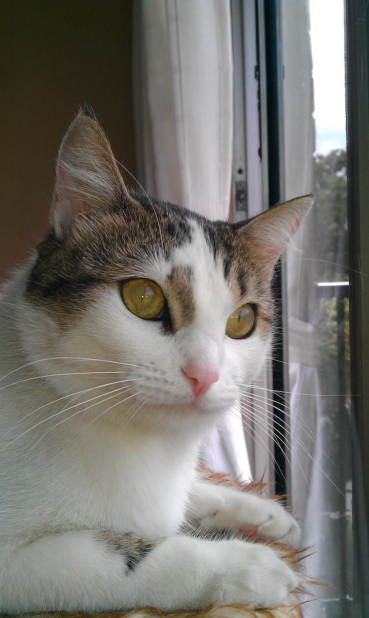 cute cat, cat, cat face, animals, pet, cat's eyes
