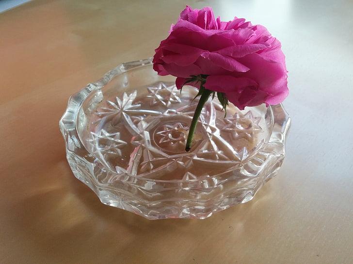 bunga, asbak, ekologi, Diberkati, Rosa