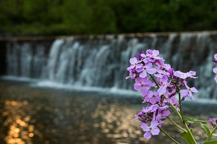 λουλούδι, Καταρράκτης, φράγμα, νερό, φύση, φυσικό, Ζεν
