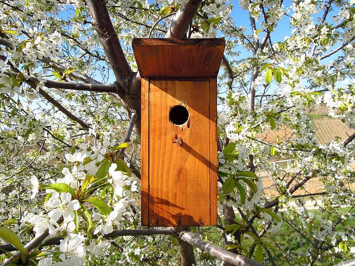 Bird's lair, Bird house, ODU, lintu, Luonto, oksa, kukkiva puu