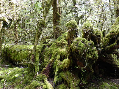 rainforest, green, plant, forest, leaf, nature, new zealand