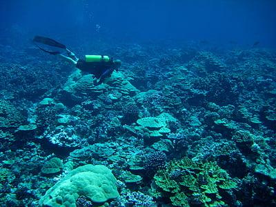 more, oceana, vode, pod vodom, ronilac, čovjek, istraživanje