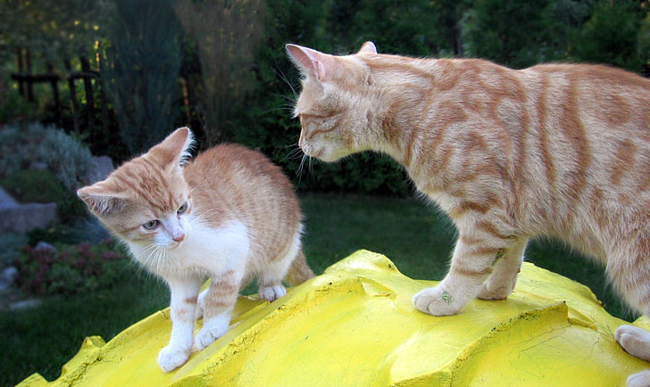 kitten, cat cat, chick