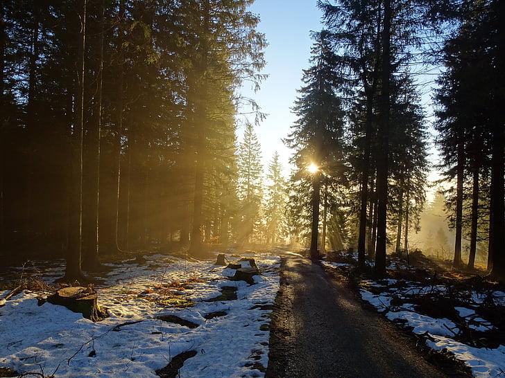 metsa, loodus, puud, meeleolu, talvel, udu, päike