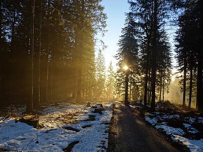 bosc, natura, arbres, estat d'ànim, l'hivern, boira, sol