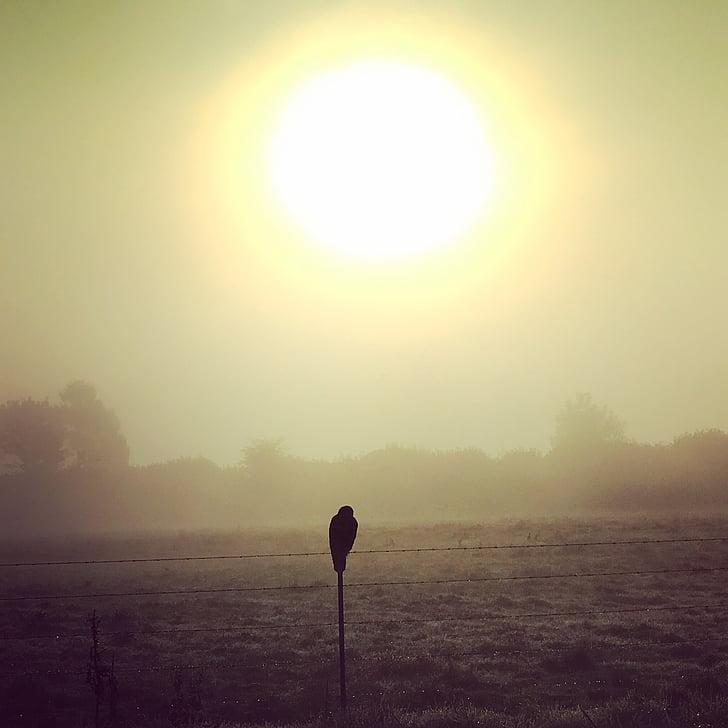 升起太阳, 猎鹰, 草原, 太阳