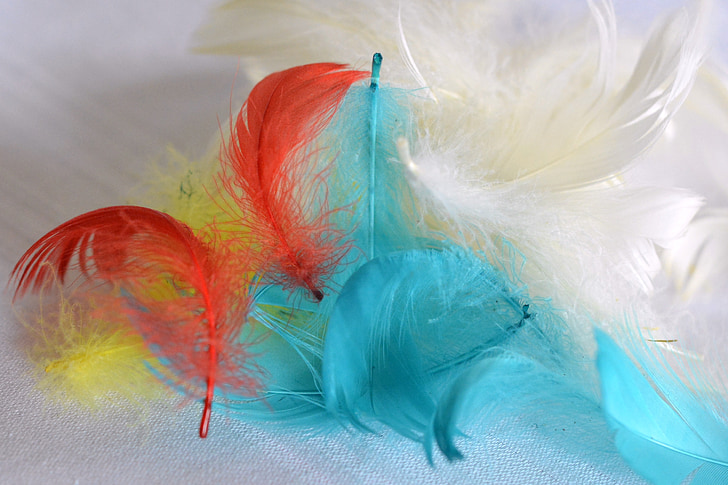 pen, feathers, colored feathers, ornaments, colorful, colored