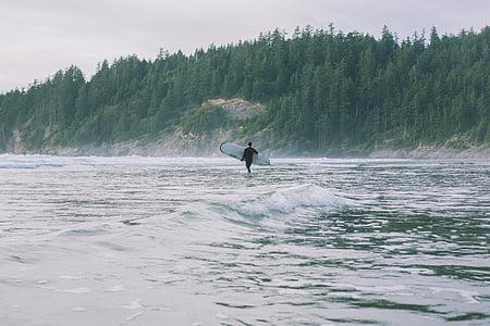 océan, Surf, surfeur, Conseil d'administration, planche de surf, pins, vagues