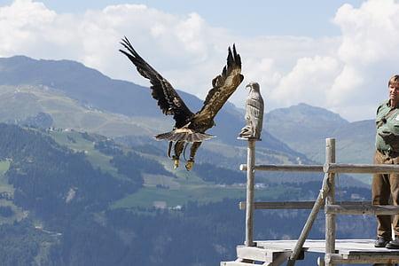 adler, flight, raptor, bird of prey, fly, bird, animal