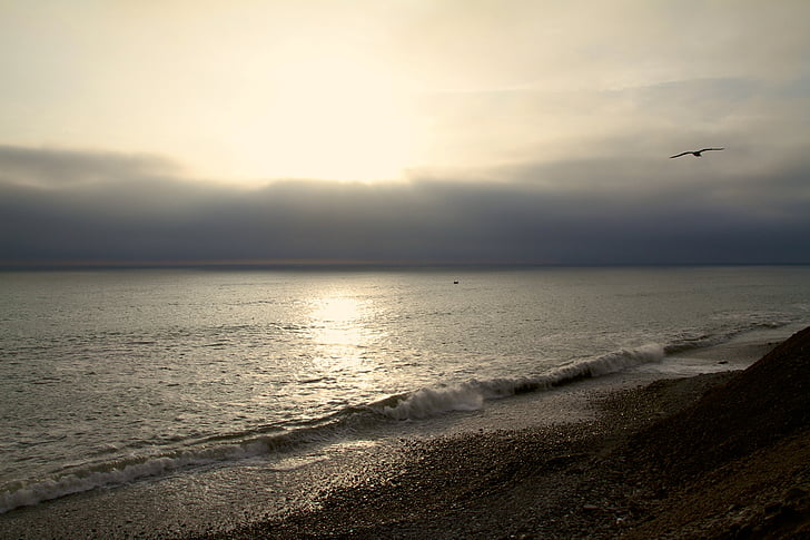 mar, agua, Playa, Pacífico, Océano, pájaro
