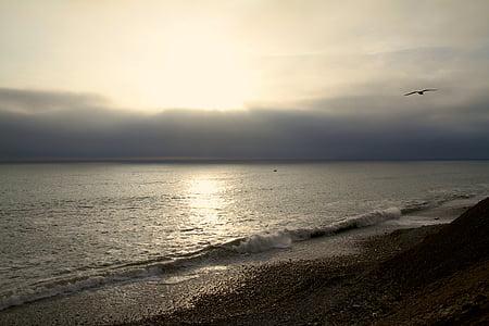 Mar, l'aigua, platja, del Pacífic, oceà, ocell