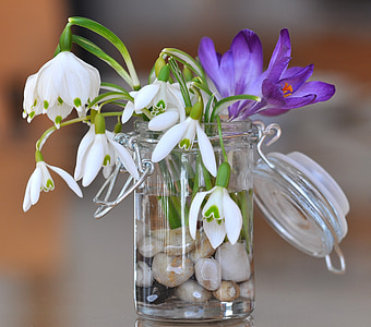 snowdrop, lily of the valley, crocus, flowers, white, purple, stones