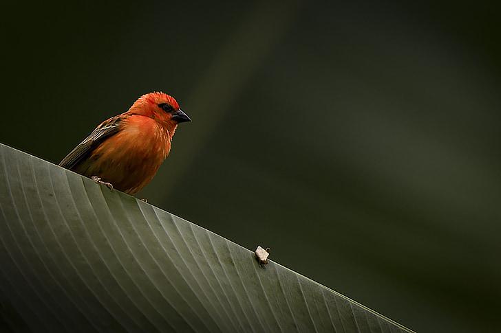 птица, листа, Грийн, екзотични, природата