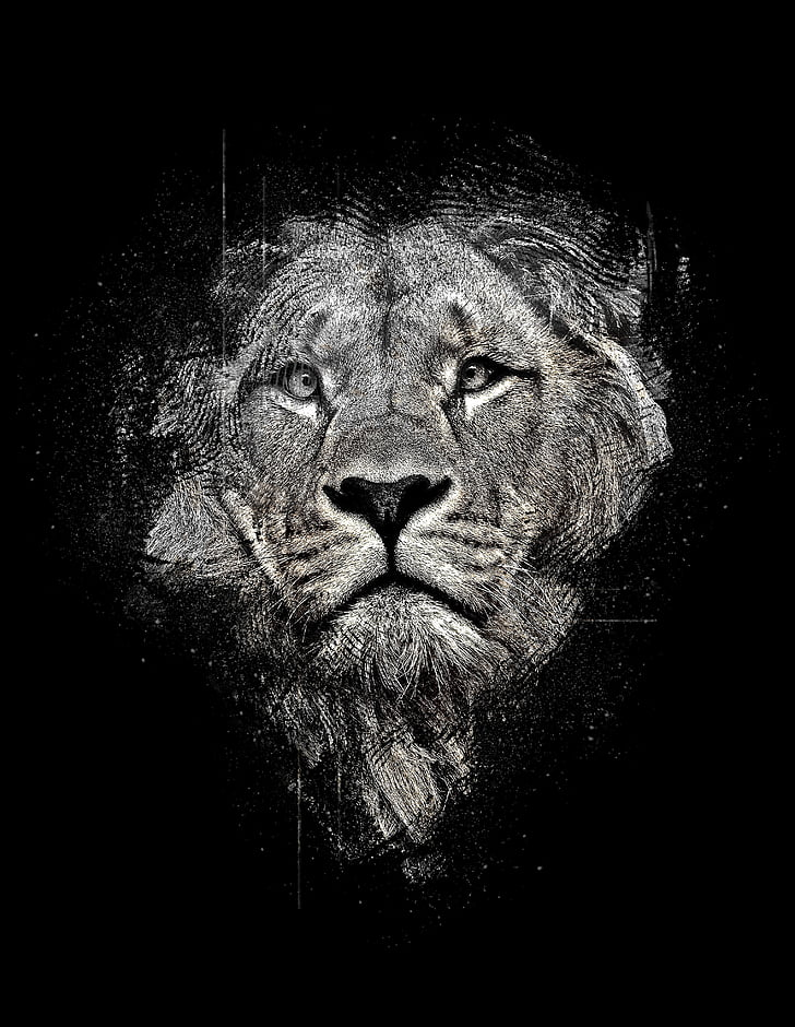lion, lion abstract, abstract, black and white, black, magic, black abstract