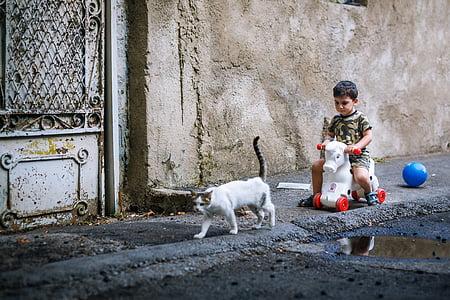 人文, キティ, 再生, 子, ストリート, 猫, 乗る