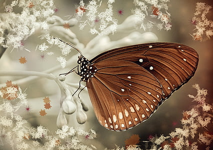 papallona, marró, baladre, natura, papallona - insecte, insecte
