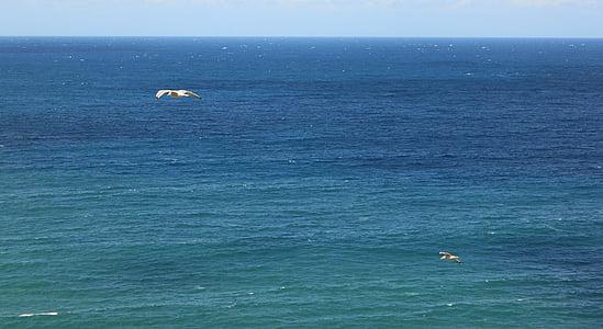 Mar, oceà, l'aigua, Atlàntic, sota l'aigua