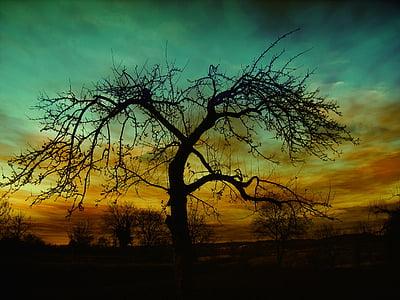 inställningen, solnedgång, atmosfär, moln, humör, kvällen, gräs