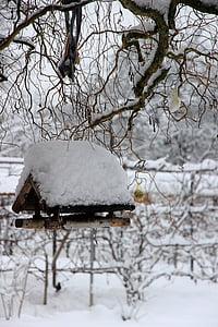 winter, snow, white, bird feeder, aviary, bird, cold