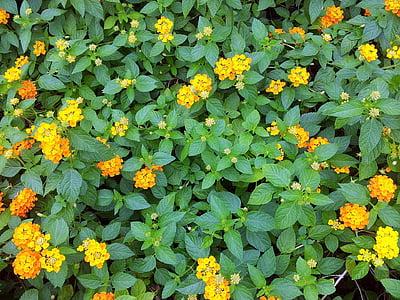 kollane, lill, õis, tapeet, taust, tekstuur
