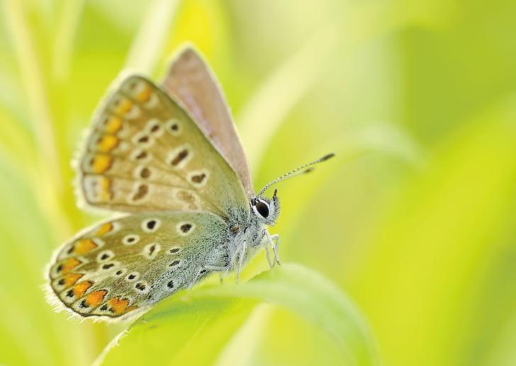 vlinders, insect, bezkręgowiec, macro, natuur, botanische tuin