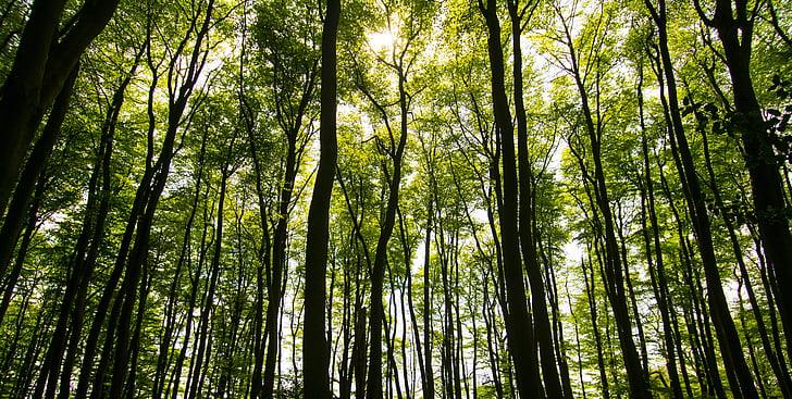 stromy, sluneční světlo, léto, Les, Příroda, zelená, světlo