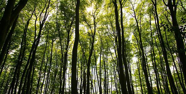 trær, sollys, Sommer, skog, natur, grønn, lys