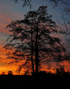 Alba, l'hivern, morgenstimmung, Alba d'hivern, cels, cel, natura