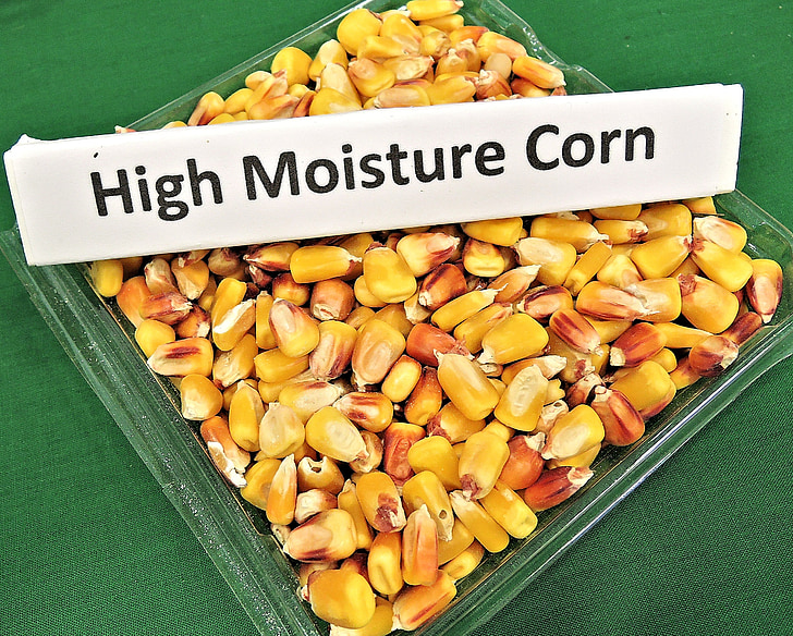 vysokej vlhkosti obilia, krmivo pre zvieratá, zrno, vysoký výnos