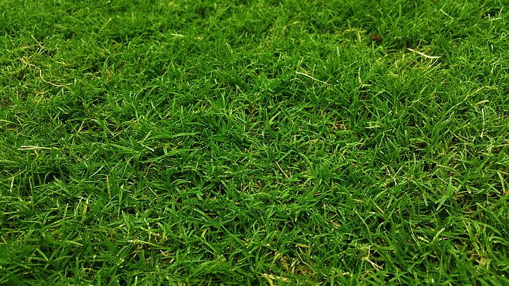 koyu yeşil, Golf yeşil, çimen, çim sahası, çim arazi, otlak, otlaklar