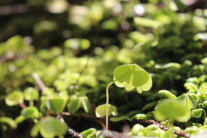 plants, ferns, forest, the sun, light, nature, foliage